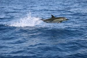 Delphin20