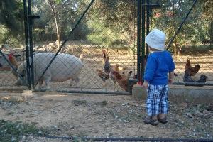 Tiere füttern...