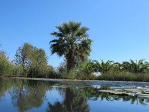 Quintamar Natur Pool