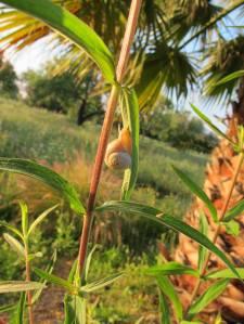 Agritourismus